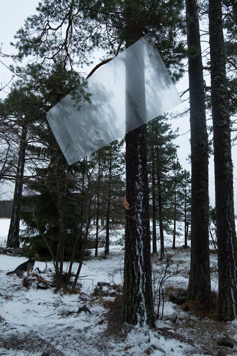 Kennolevy puussa