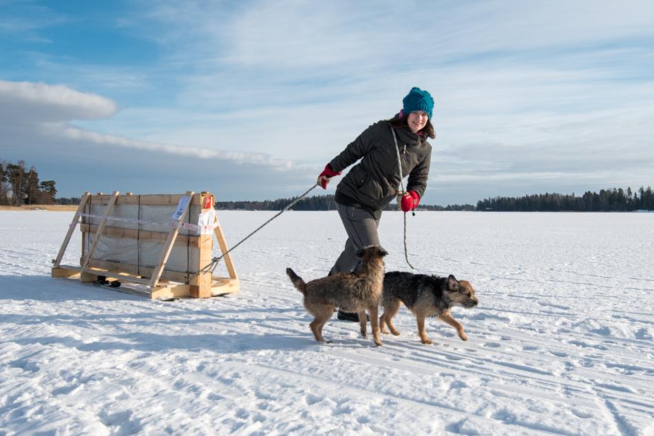 kasvihuonelasien kuljetus saareen jäätä pitkin