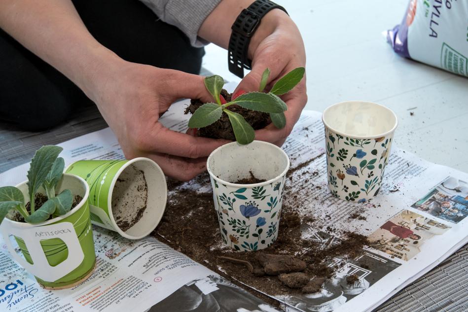 Taimien kasvatus kasvihuoneessa