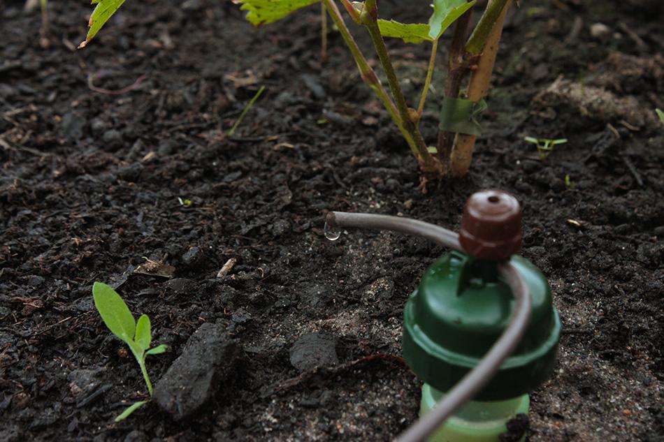 Blumat kastelujärjestelmä, kasvihuoneen kastelu, taimien kastelu, tippukastelu, automaattikastelu