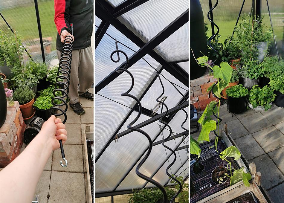 taimispiraali kasvihuoneessa