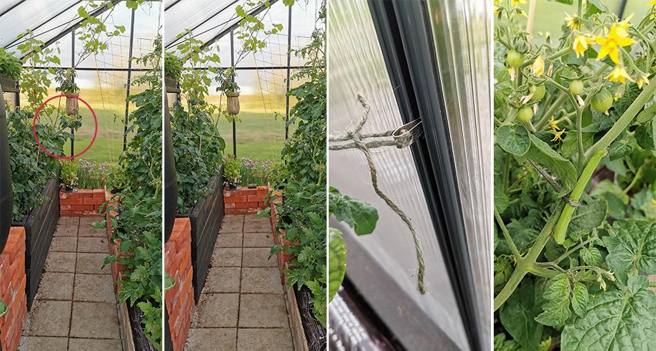 taimien tuenta kasvihuoneessa