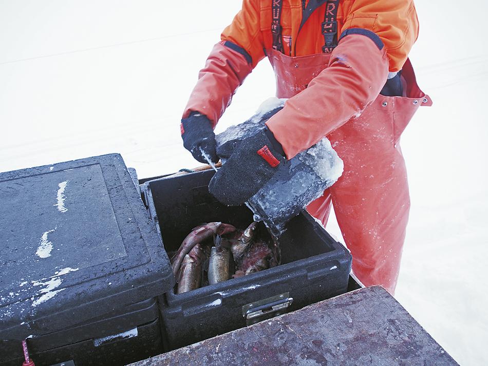 kalaverkot talvikalastuksessa