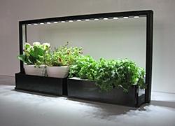 Taimikasvatus ja kasvivalot