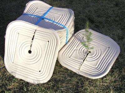 Taimitassu, katesuoja taimille 40 x 40 cm