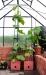 Biogreen Maxitom -kasvuruukku