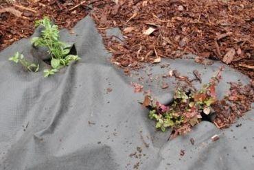 Biologiskt nedbrytbar odlingsduk 1 x 10 m