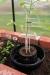 Kasvuruukku GROW POT kastelusäiliöllä, 3 kpl