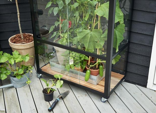 Kun hyllyköstä poistetaan hyllytaso, mahdollistaa se korkeampienkin kasvien kasvatuksen. Hyllykköä on helppo siirrellä pyörien ansiosta.