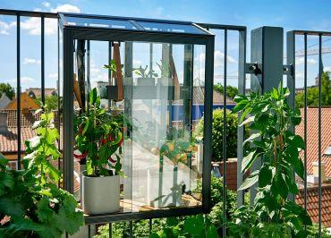Odlingsvitrin till balkongen eller väggen Juliana Balcony