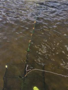 Fångstarm till fiskmjärde